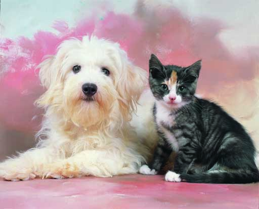 - Cats & dogs