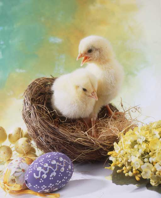 Easter photographic